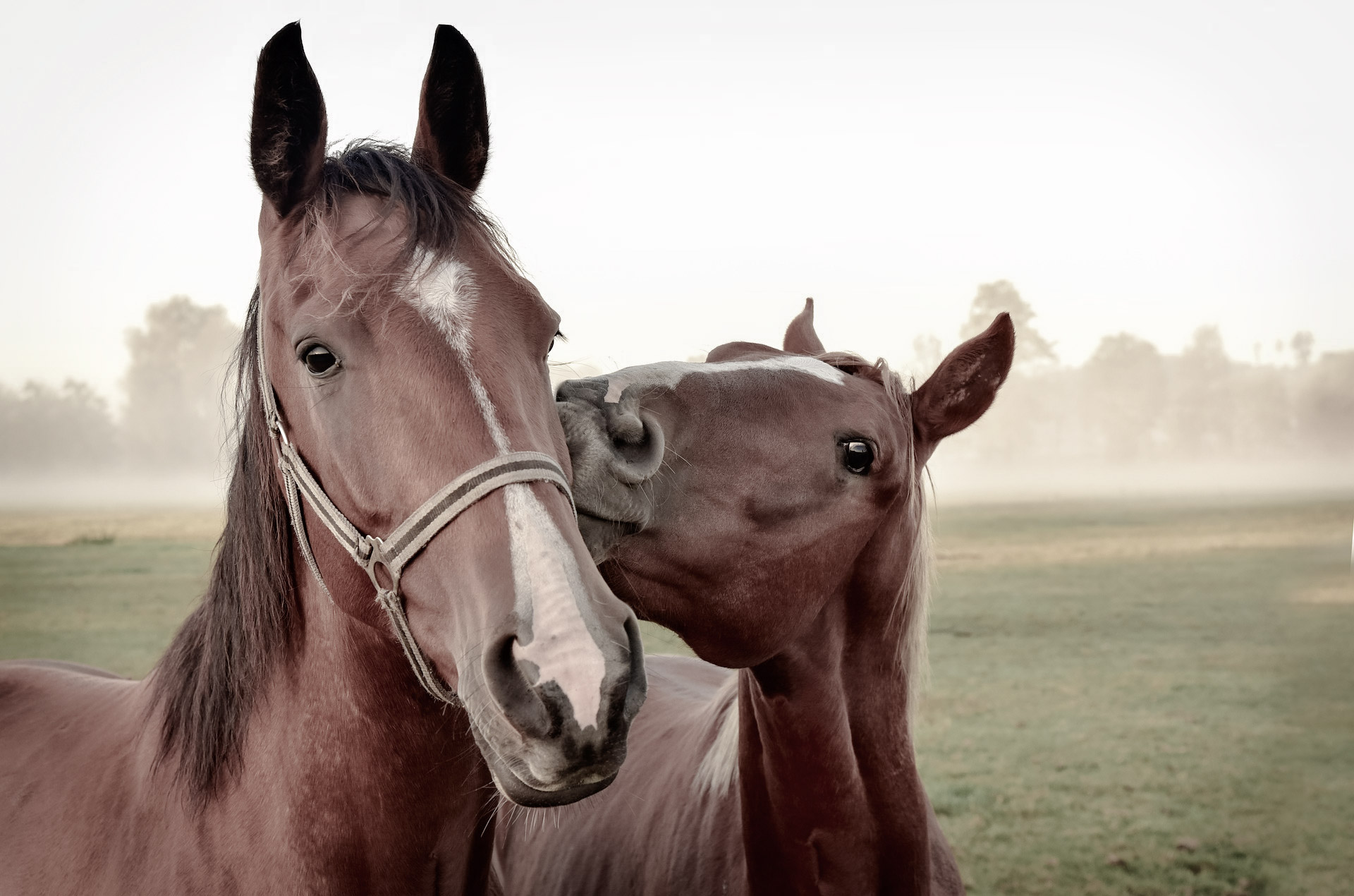 Find a Horse